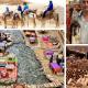 Morocco travel. Callioure + Marrakesh